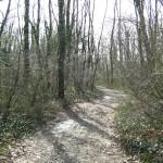 Spoleto, 69enne si suicida nei boschi della Valnerina