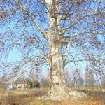 Spoleto, alberi pericolanti: il Comune interviene con la bonifica