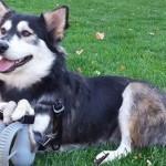 Cronaca: Derby, il cane disabile che ora può correre grazie ad una protesi in 3D (VIDEO)