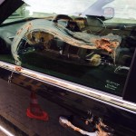 Umbria, imbrattata di sterco l'auto dell'ex ministro Rotondi