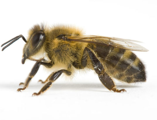punture insetti.jpg